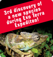 3rd discovery of a new species during Exo Terra expedition