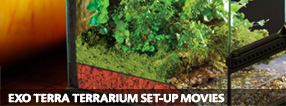 Exo Terra Terrarium Set-Up Movies