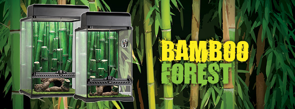 New: Bamboo forest habitat