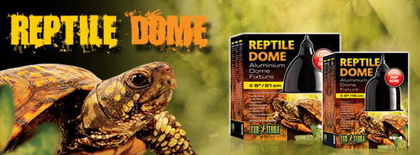 New: Reptile dome