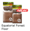 Equatorial Forest Floor